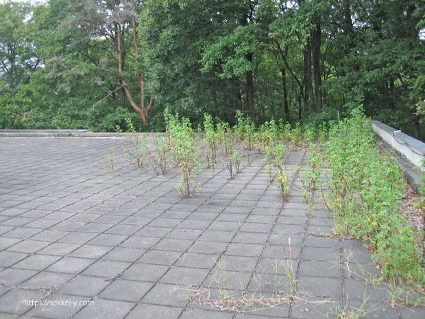 草が生えている屋上