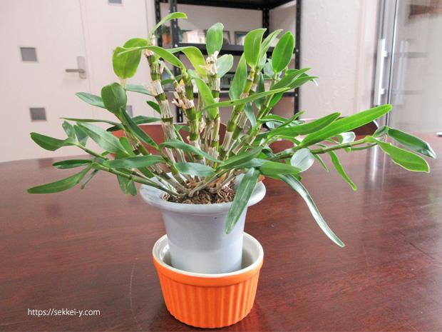 1年一緒に成長する観葉植物